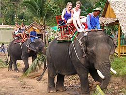 Elephant Trekking in Koh Phangan – A Fun Family Adventure