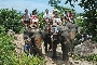 Elephant Trekking - Just outside Chaloklum you can enjoy an elephant ride through Koh Phangan's jungle.